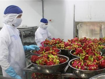 Nông sản Việt và cuộc đua vào thị trường toàn cầu 15.000 tỷ USD