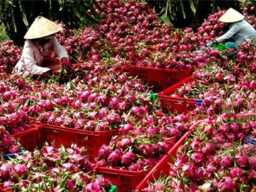 Nông sản Việt cần tận dụng cơ hội mới, tham gia vào chuỗi cung ứng toàn cầu