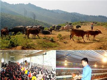 Nông dân Nghệ An phải thể hiện rõ vai trò chủ thể trong xây dựng nông thôn mới