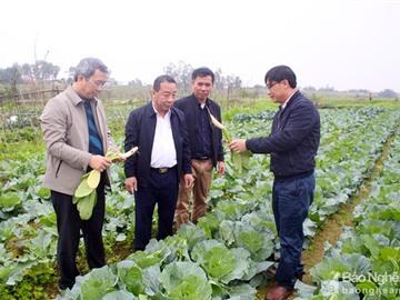 Miền Trung chú trọng sản xuất nông nghiệp trong điều kiện dịch bệnh và thiên tai